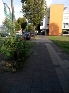 img_20160917_091147-strassenbaeume-gebag-faellung-a